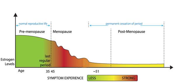 Menopause diagram